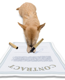 A small dog is holding a pen and signing a contract. He is learning how to copyright a book.